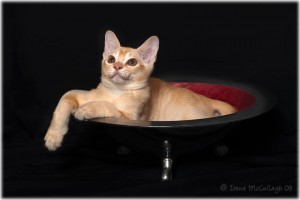 Our cat, Italy, in a bowl. Voluntarily