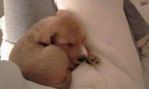 Rocky (adopted puppy), Leanne Ostrofsky