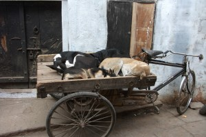 cart of sleeping dogs